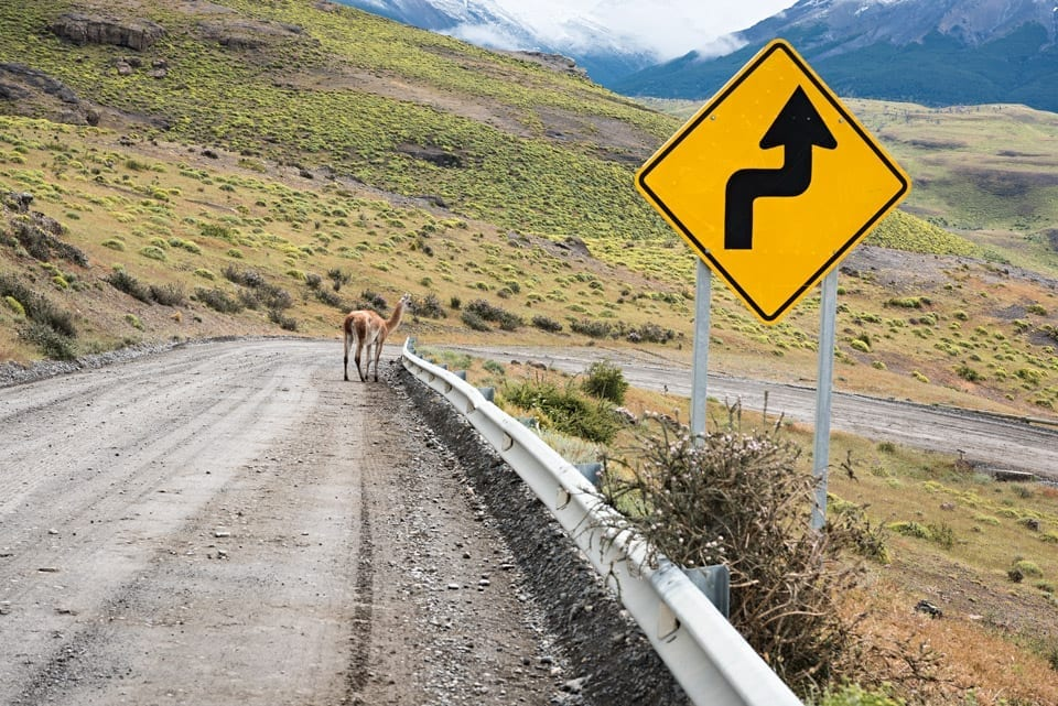 A curvy road in Patagonia with a guanaco
