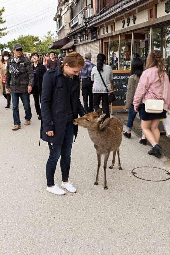 A picture of a young lady and a  free-roaming deer in the streets of Miyajima island. Miyajima is a perfect spot for Japan photography.