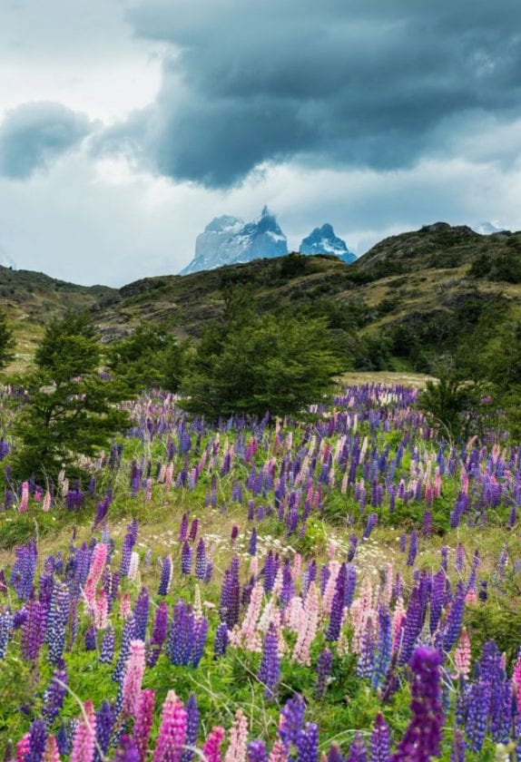 Summer in Torres del Paine by Global_Pics